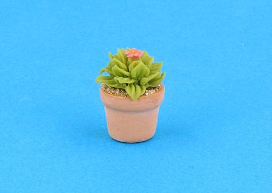 Sm4518 - Cactus