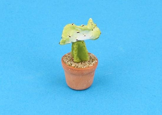 Sm4521 - Cactus