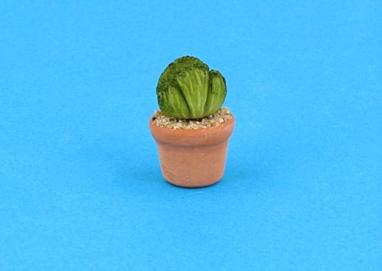 Sm4502 - Cactus