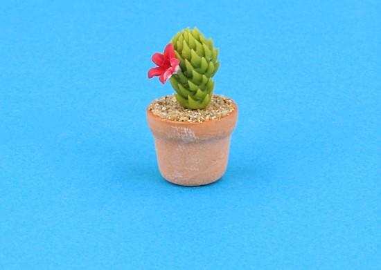 Sm4504 - Cactus