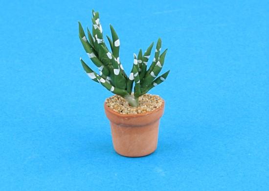 Sm4507 - Cactus