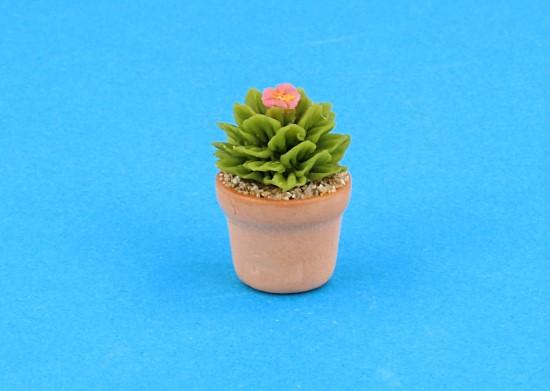 Sm4516 - Cactus