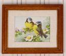 Tc2297 - Quadro uccelli