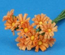 Tc1019 - Marguerites orange