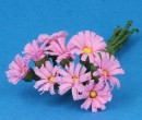 Tc1020 - Margherite rosa