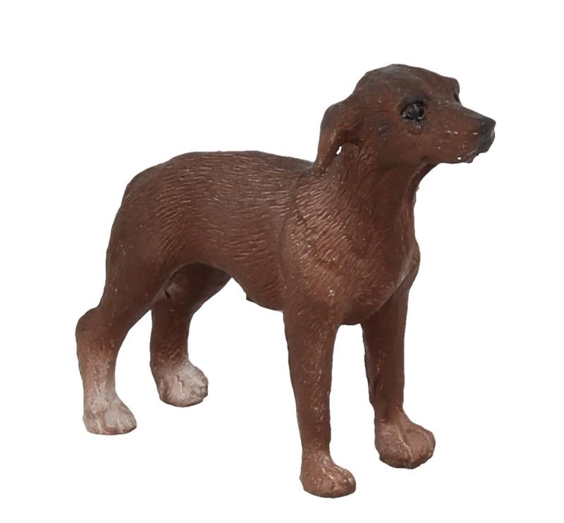 Tc1511 - Perro