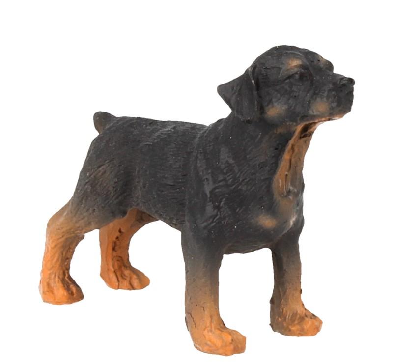 Tc1536 - Perro rottweiler