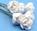 Tc0139 - Fleurs blanches