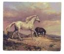 Tc0819 - Leinwand für Pferde