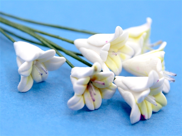 Tc0964 - Flores blancas