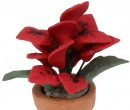 Tc2520 - Poinsettia