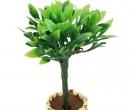 Tc2544 - Pot avec plante