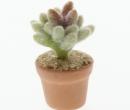 Sm4510 - Cactus
