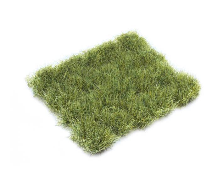Dr30428 - Green jungle grass