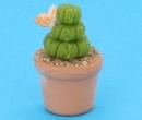Sm4509 - Cactus