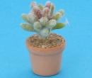 Sm4510 - Kaktus