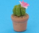 Sm4511 - Cactus