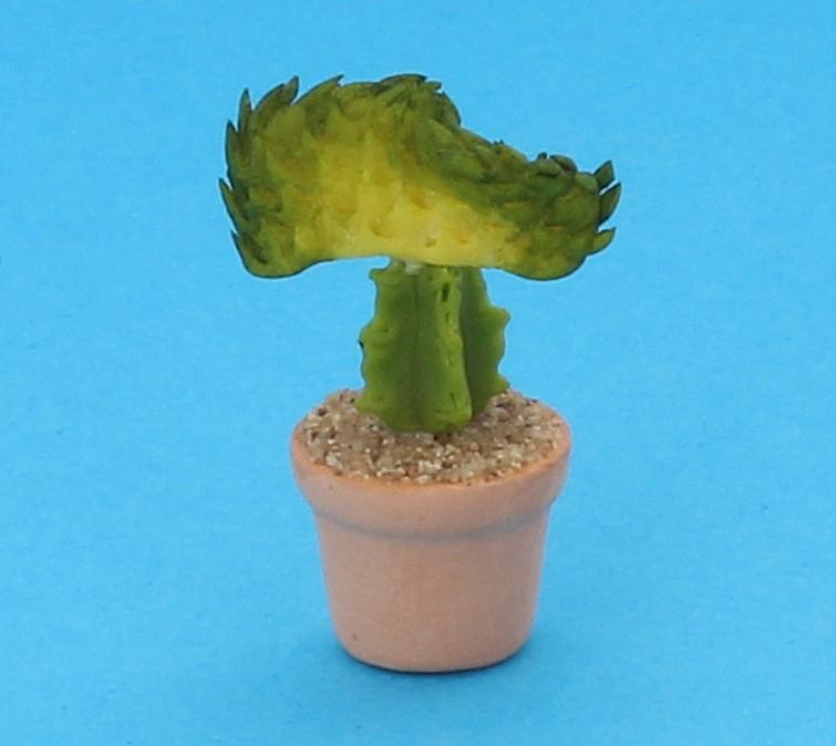 Sm4512 - Cactus