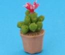 Sm4519 - Cactus