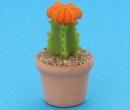Sm4522 - Kaktus
