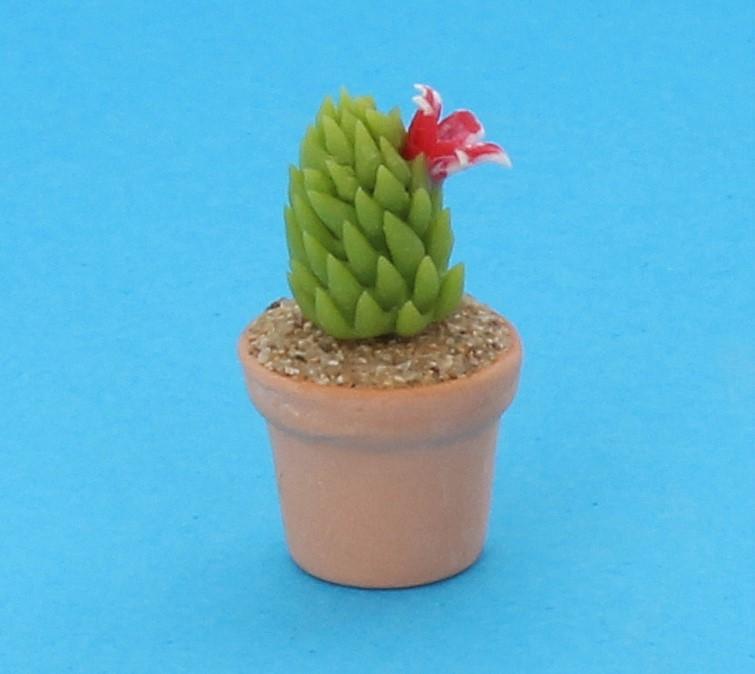 Sm4525 - Cactus