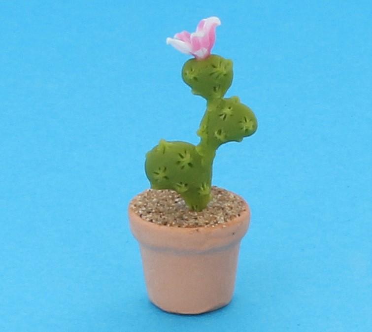 Sm4526 - Cactus
