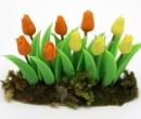 Tc0552 - Tulipes