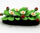 Tc0567 - Planter avec des fraises