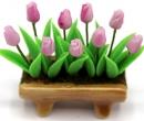 Tc0910 - Pot de fleurs avec tulipes