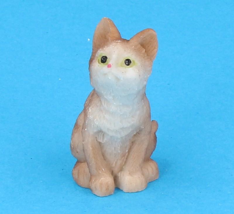 Tc1904 - Cat