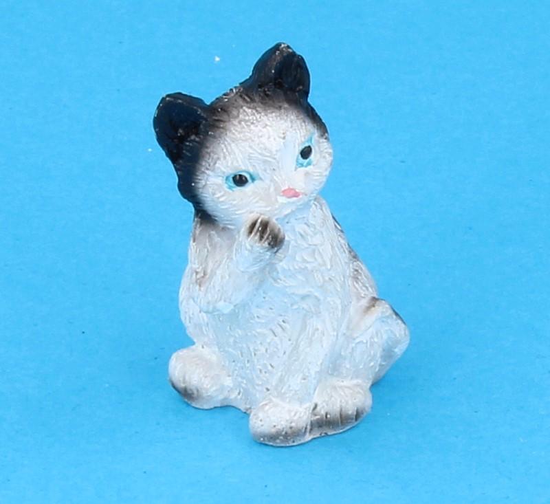 Tc1943 - Cat lying