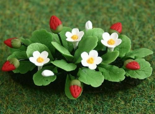 Tc0567 - Planta con fresas