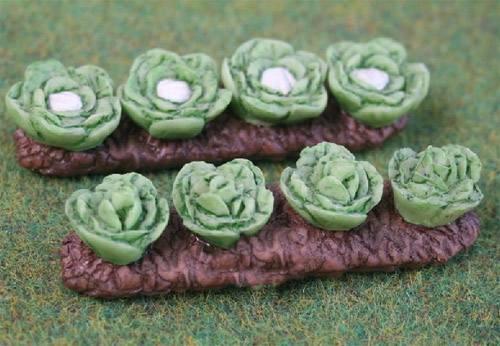 Tc0568 - Plante de laitue et de chou fleur