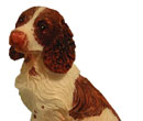 Tc0952 - Cocker spaniel