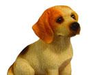 Tc0953 - Dog